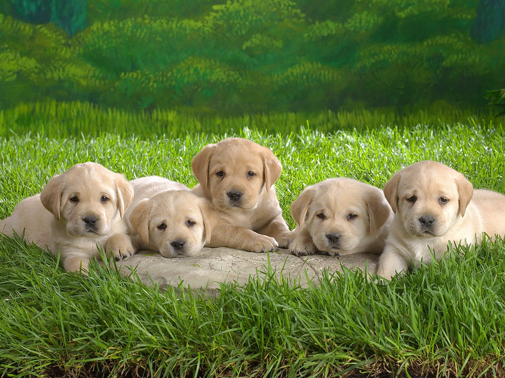Heres How To Care For Your Puppy Rspca Australia
