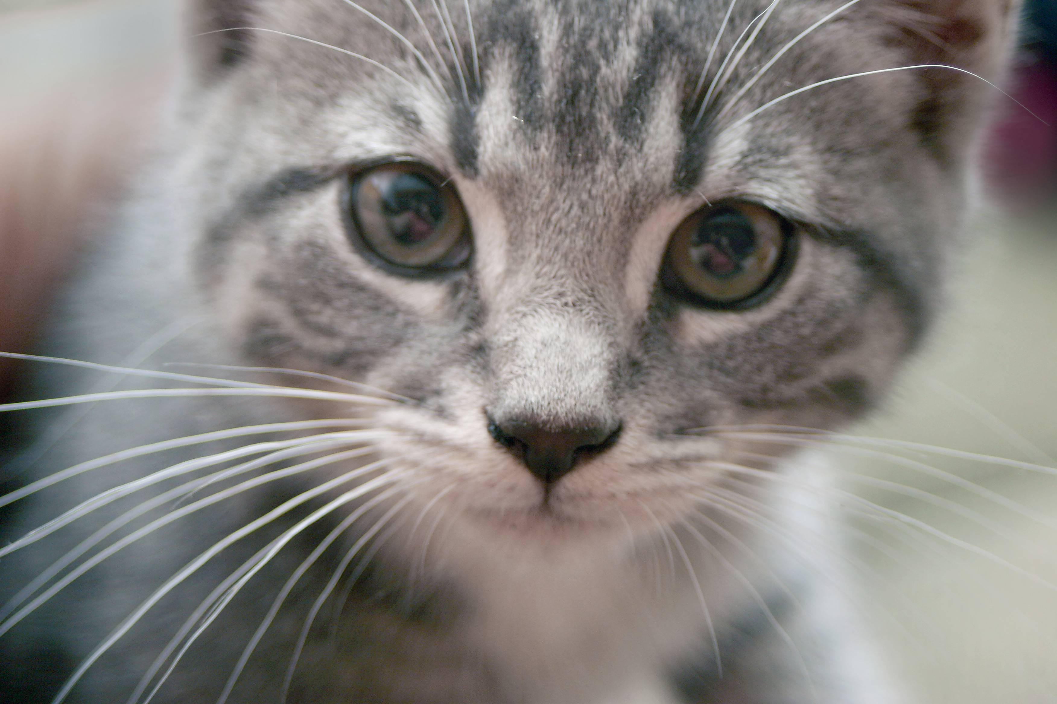 The Health Benefits Of Desexing Your Pets Rspca Australia