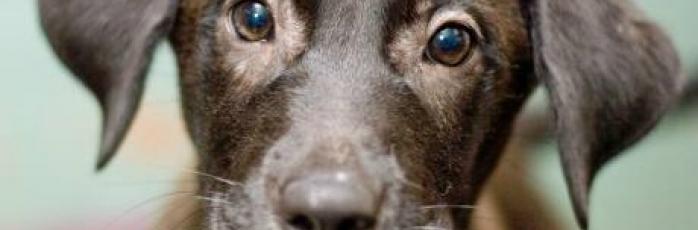 Dog Rescue Perth Scotland