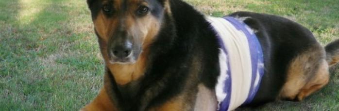 Injured Animals | RSPC...