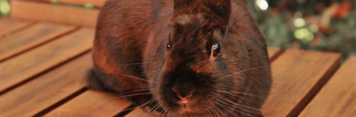 Adopting small animals | RSPCA Australia