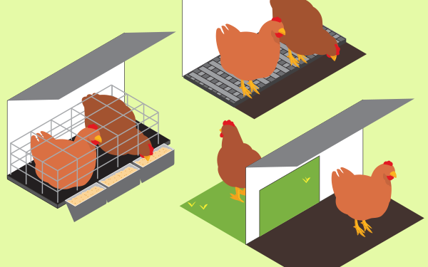 Layer hen housing table diagram