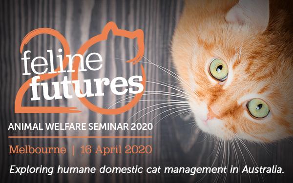 Animal welfare seminar 2020 feature cat