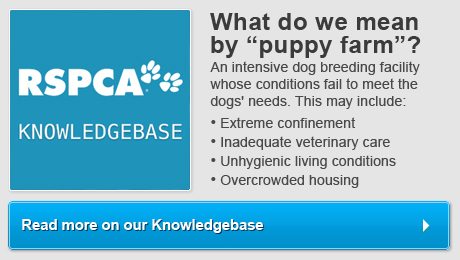Puppy Farms   RSPCA Australia