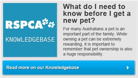 responsible pet ownership rspca australia