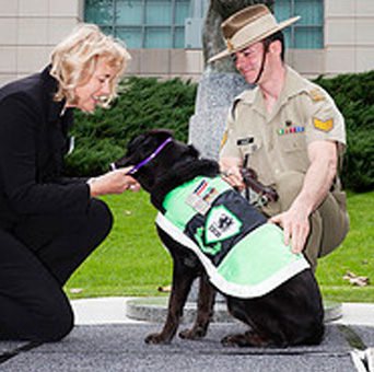Then RSPCA Australia President Lynne Bradshaw presents Sarbi with the Purple Cross Awards, watched by an Australian Army dog handler.