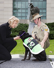 Sarbi the Explosive Detection Dog receiving the RSPCA Purple Cross